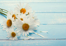 Daisies on the blue wooden table Royalty Free Stock Photo