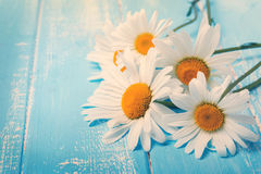 Daisies on blue wooden table. Toned photo Royalty Free Stock Photos