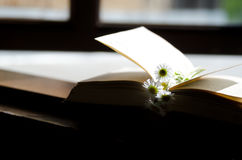 Daisies and  book. Royalty Free Stock Image
