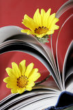 Daisies in Book Pages Stock Photo
