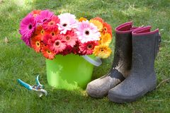 Daisies, boots, & secateurs - yard work. Colorful daisies in a bucket, boots, & secateurs - yard work Royalty Free Stock Photos