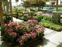 Daisies, Botanical Garden Centers, Claremont, California, USA Stock Photo