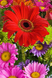 Daisies bouquet Royalty Free Stock Image