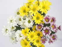 Daisies bouquet. Pink, yellow and white Royalty Free Stock Photos