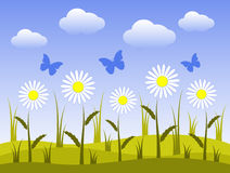 Daisies and butterflies. Illustrated flowery meadow and butterflies Royalty Free Stock Image