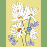 Daisies card Royalty Free Stock Photography