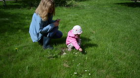 Daisies child mother. Mother sits in the meadow daughter gather the small white daisies and give mom stock footage