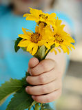 Daisies in a children's hand Stock Photos