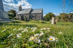 Daisies in church graveyard Stock Image