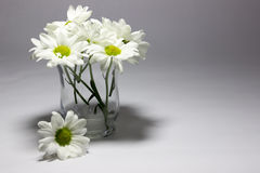 Daisies in a clear vase Royalty Free Stock Photos