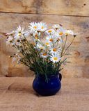 Daisies Royalty Free Stock Image