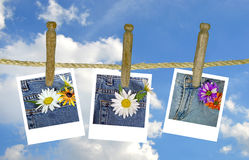 Daisies on clothesline Royalty Free Stock Photo
