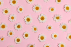 Daisies collection Royalty Free Stock Images