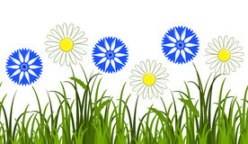 Daisies and cornflowers border Royalty Free Stock Image
