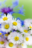 Daisies and cornflowers close-up Royalty Free Stock Photography