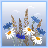 Daisies, cornflowers and spikelets Stock Images