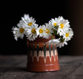Daisies in  cup Stock Images