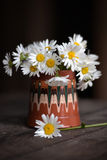 Daisies in  cup Stock Image