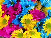 Daisies, Daisy, Flowers, Bloom Stock Photo