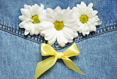 Daisies on denim background Stock Image