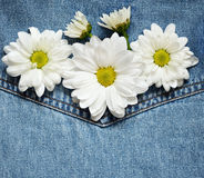 Daisies on denim fabric Stock Images