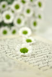 Daisies on Diary Royalty Free Stock Photo