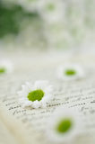 Daisies on Diary Stock Photos