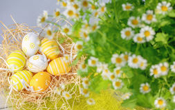 Daisies and Easter eggs. Royalty Free Stock Photography