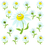 Daisies with faces Stock Image