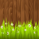 Daisies with fence stock illustration