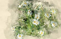 Daisies in the field. Watercolor background Stock Photo