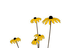 Daisies Five Royalty Free Stock Images