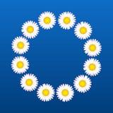 Daisies Flower Coronal Stock Image
