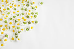Daisies flowers background Stock Image
