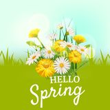 Hello spring, a bouquet of daisies flowers dandelions, on a green background, cartoon style, vector, illustration, flyer. Daisies flowers spring background Stock Photo