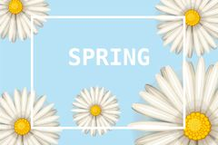 Hello spring, daisies flowers background, cartoon style, vector, illustration, flyer, banner, isolated. Daisies flowers spring background, cartoon style Stock Photography
