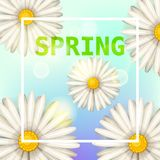 Daisies flowers spring background, cartoon style, vector, illustration, flyer, banner, isolated. Daisies flowers spring background, cartoon style Royalty Free Stock Image