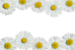 Free Daisies Frame Royalty Free Stock Photo - 19523035