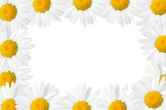 Daisies frame Royalty Free Stock Photography