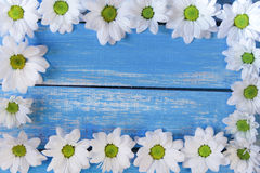 Daisies frame Stock Photography
