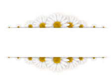 Daisies frame Royalty Free Stock Photos