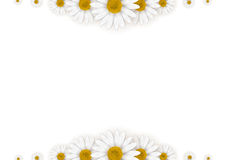 Daisies frame Royalty Free Stock Images