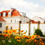 Daisies in front of house Royalty Free Stock Photography