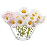 Daisies in glass Stock Image