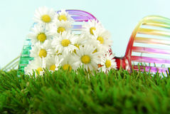 Daisies and glasses  in  grass Stock Photos