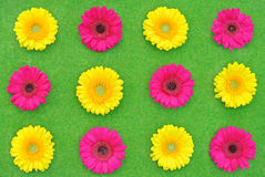 Daisies on grass. Yellow and pink daisies on a grass Stock Photos