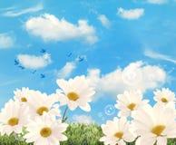 Summer Daisies Royalty Free Stock Photo
