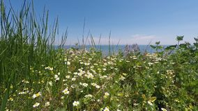 Daisies and grass on the background of sea and blue sky.