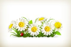 Daisies in grass. Computer illustration on white background Royalty Free Stock Photo