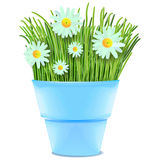 Daisies and grass in vase  Stock Image